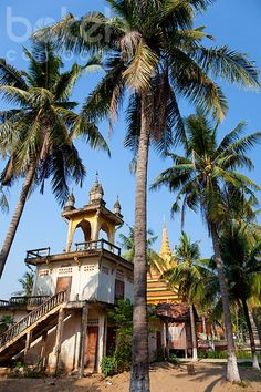 Monastery and palm trees | Kandal Province, Cambodia