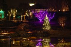 The lights in Lost Hollow, across from Sunken Pond during Holidays at the Garden 2014 at Daniel Stowe Botanical Garden.