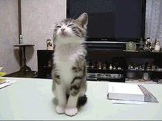 "Funny cat....""i jist wanna sleep peeps!!!!"" :)"
