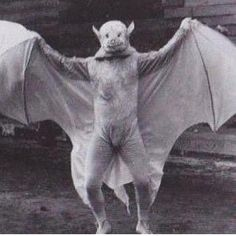 human man woman in bat costume, black & white Photo