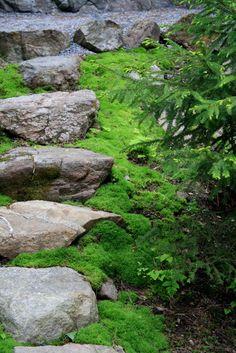 Luonnonkiviportaat metsäpuutarhassa Moss Garden, Garden Art, Woodland Garden, Shade Garden, Pathways, Ferns, Stepping Stones, Beach House, Golf Courses