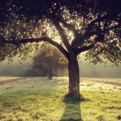 Would be nice to sit right under the tree and read a good book.