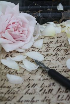 ~old letter and roses