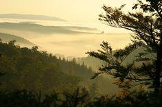 フォレスト, 霧, 秋, 工場, 木, 自然