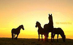 silhouettes of wild horses. pretty & free