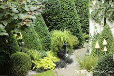 Wizytówka - Ogród nie tylko bukszpanowy - strona 16 - Forum ogrodnicze - Ogrodowisko