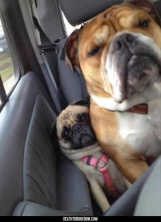 Dogs That Have Zero Concept Of What Personal Space Is