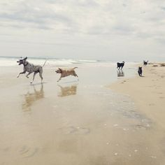 This group knows how to party at the beach. Too much fun! #beachtrainingthursdays #dogtraining #Dogfitness #fitdogs #huntingtondogbeach