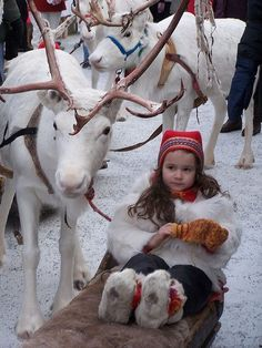 Young Sami girl beside a beautiful white reindeer