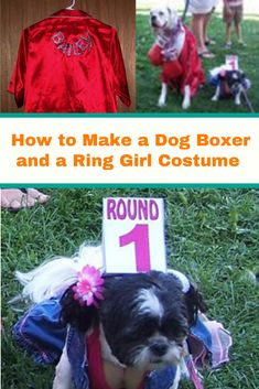 A stylish costume idea for your dog. Great for Halloween or other events where your dog may need a costume. #DIYdog #Dog #DogFun #DogIdeas #DogStyle