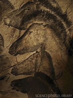 Stone age cave painting of horses from Chauvet, France. The paintings there are the oldest known, carbon-dated to approximately 33,000 years ago, almost twice the age of the Lascaux cave paintings.­­­ The dates have been a matter of dispute but a study published in 2012 supports placing the art in the Aurignacian period, approximately 30,000-32,000 BP.