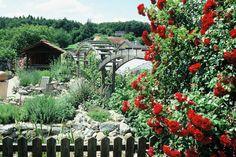 Kräutergarten Kraut