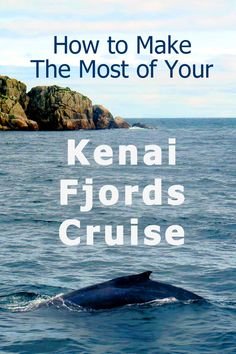 Kenai Fjords National Park Cruise - Trip Report & Tips - Trip Memos Cruise Travel, Travel Usa, Travel Tips, Travel Ideas, Travel Photos, Cruise Tips, Travel Destinations, Alaska Summer, Alaska Travel