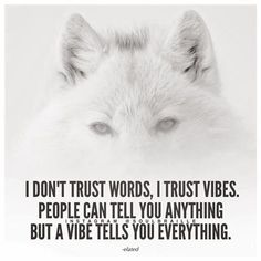 It's taking me about two minutes to scan the vibes of someone I've never met before and about 30 seconds in someone I know. Wolf Quotes, Animal Quotes, Dont Trust, Trust Me, Trust Words, Life Coach Training, Intj Personality, Wolf Pictures, Old Soul