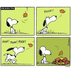 Autumn Weekends