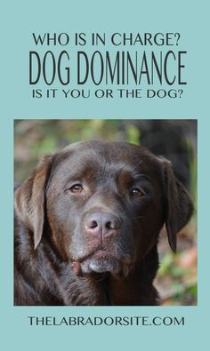 A guide to dog dominance and alpha dogs @KaufmannsPuppy