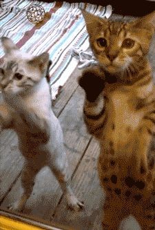 Let Us In!!! funny cute animals cat lol kitten gif kitty