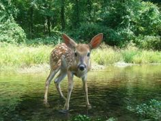 Field & Stream Trail Cam Photos: The 56 Best Wildlife Shots from Our 2012 Fall Contest