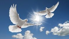 4621949-two-doves-flying-with-spread-wings-on-sky.jpg 1,200×696 pixels