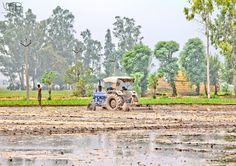 #agriculture #tractor #life #pind #trees