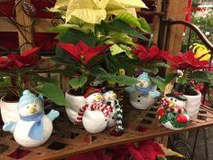 December Flowers & Plants