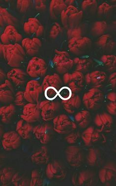 Infinite with red roses wallpaper Tumblr Wallpaper, Flower Wallpaper, Wallpaper Quotes, Hipster Wallpaper, Wallpapers Tumblr, Cute Backgrounds, Cute Wallpapers, Wallpaper Backgrounds, Wallpaper Samsung