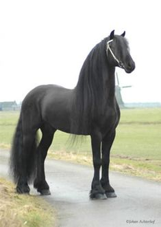 Beautiful horse! Black beauty! Just stunning!
