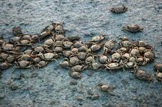 Χιλιάδες ψάρια και καβούρια νεκρά στην Αλυκή Λήμνου.