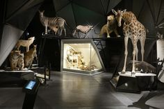 The Musée des Confluences recently opened in Lyon holds the rich heritage from the Musée d'Histoire Naturelle – Guimet. Its name comes from its privileged geographic positio