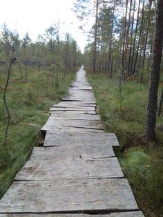 Paunküla marsh, Estonia by Maren Toom