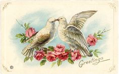 Old Valentine Picture Doves -Graphics Fairy