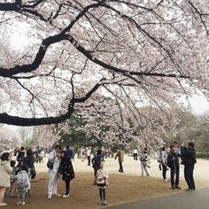 Shinjuku Gyoen  Photo by @abbeysy by japanloverme