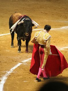 Spain Granada Bull Fight by elatawiec62, via  They slice him with the sword right threw his spine to drop him, if it is a bad kill he won't drop and will bleed from the nose and mouth very horrific to see.