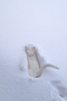 Deep deep in snow