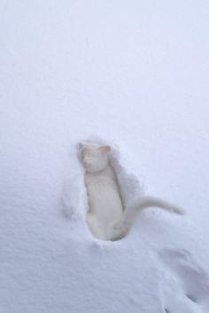 Deep deep in snow