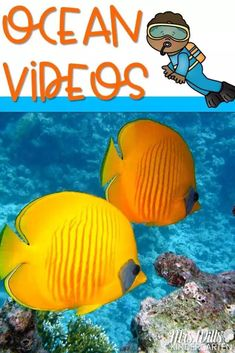 Ocean videos for kids that are perfect for your study of the ocean in kindergarten and first grade. Learn about the five different oceans, coral reefs, and ocean animals with these teacher-approved videos. Ocean Animals For Kids, Dolphins For Kids, Ocean Animal Crafts, Sharks For Kids, Ocean Crafts, Ocean Activities, Animal Activities, Preschool Activities, Ocean Lesson Plans