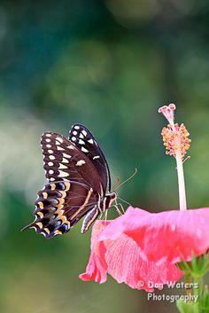 Wow!butterfly flower
