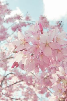 Blossom Trees, Cherry Blossoms, Background Images, Spring Time, Flowers, Plants, Gardening, Water, House