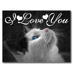Blue Eyed Cat Photo Image I Love You Valentine  Postcard and Greeting Cards