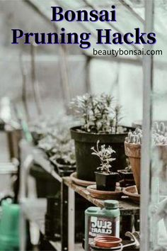 Pruning your bonsai takes practice, believed, and treatment