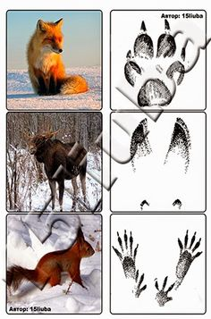 free download  animal footprints                                                                                                                                                                                 More Animal Activities For Kids, Science Projects For Kids, Science Experiments Kids, Science For Kids, Science And Nature, Forest Animal Crafts, Forest Animals, Animal Footprints, Montessori Science