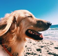 Now THAT is a happy dog! Don't leave your furry friends at home - check out our pet friendly vacation rentals and bring the whole family to Emerald Isle!