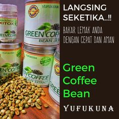 Green Coffee Bean Extract YUFUKUNA, Cara Pengolahan, Benih Kopi, Pupuk dan Cara Tanam, Lebih di Tujukan Untuk Program Pembakaran Lemak secara Spesifik