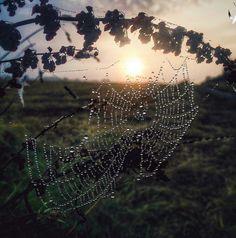 Tela de araña dps de la lluvia. Caminata X los viñedos