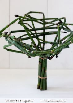Equisetum Armature base