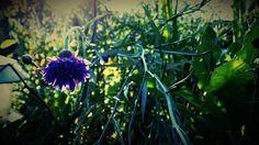 #flowers #flower #petal #petals #nature #beautiful #love #pretty #plants #blossom #sopretty #automne #flowerstagram #flowersofinstagram #flowerslovers #flowerporn #botanical #floral #florals #insta_pick_blossom #flowermagic #instablooms #bloom #blooms #botanical #floweroftheday