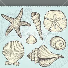 Seashells Craft Vintage Vector Elements Set Royalty Free Stock Vector Art Illustration