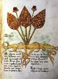 Teoderis - Alchemical herbal - Ms 1591 Fol.13r Herba Lunaria Maggiore (vellum), Italian School, (15th century) / Museo Provinciale d'Arte, Trento, Italy