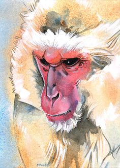 Items similar to Japanese Macaque Original Painting Watercolor Wildlife Art Monkey Painting Gift Wild Animal on Etsy Watercolor Paintings Of Animals, Watercolor Canvas, Animal Paintings, Original Paintings, Watercolour, Horse Drawings, Animal Drawings, Drawing Animals, Drawing Art