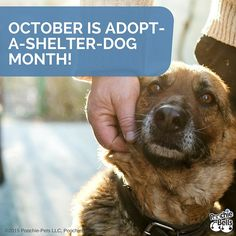 October is already here! Consider adopting a shelter pooch or donating to your favorite shelter this month:  http://poochie-pets.net/october-is-adopt-a-shelter-dog-month/